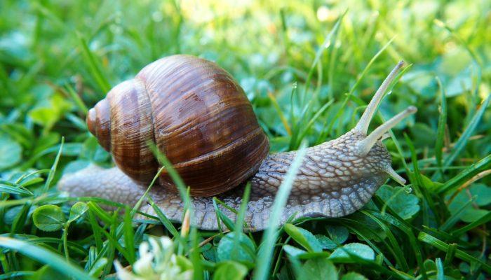 snail-2603493_1280